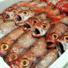 のどぐろ水揚げ日本一の下関漁港