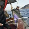 密着取材 角島の鰆(さわら)漁