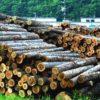 「100年の計」の森林管理を放棄 知らぬ間に進む戦後林政の大転換