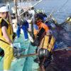阿武町漁師たちの鮮度保持の取組に密着 上田勝彦氏が神経締め等を伝授