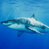 『誰かに話したくなるサメ、イカ、ウナギの話』 水産大学校の公開講座から