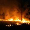アマゾン森林火災を印鑰智哉氏(日本の種子を守る会アドバイザー)の発言から考える