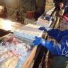 出荷急減し水産物が大幅に値崩れ コロナ不況の波にさらされる全国の沿岸漁業の現状