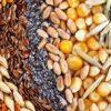 コロナ禍のさなかに種苗法改定案が国会審議入りへ 農家の自家採種禁止で揺らぐ食料安保