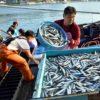 北浦沿岸の深刻な漁業の衰退 なぜ漁師が20年で6割も減少したのか 事態悪化を危惧する声